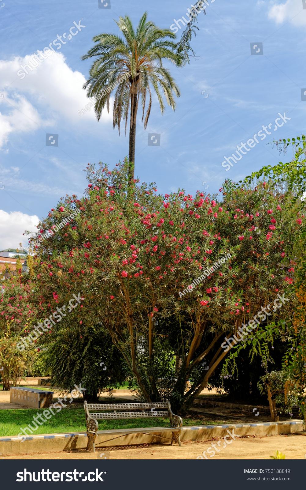 Murillo Gardens Seville Spain Located Next Stock Photo 752188849 ...