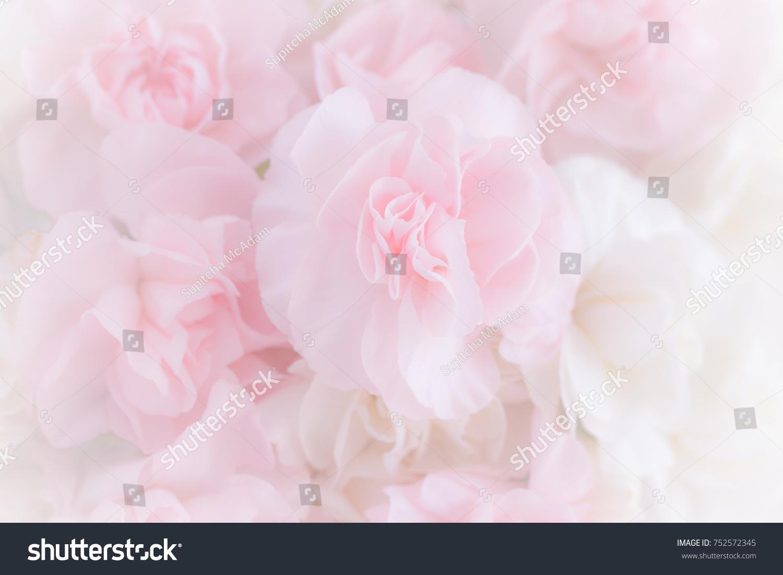 Flower Soft Background Ez Canvas