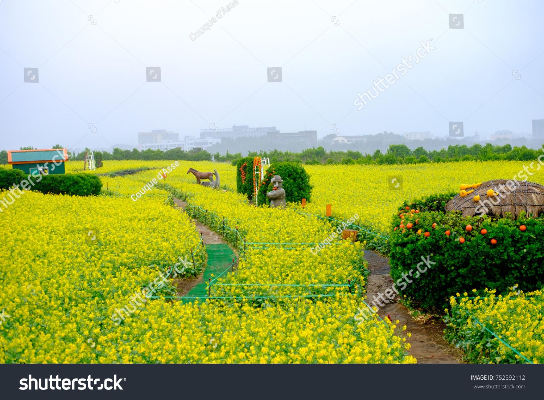 Jeju Island Rape Flowers May Stock Photo Edit Now 752592112