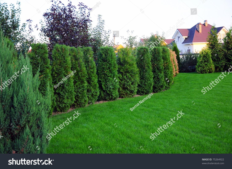 Garden Small Pine Trees Front Villa Stock Photo 75264922
