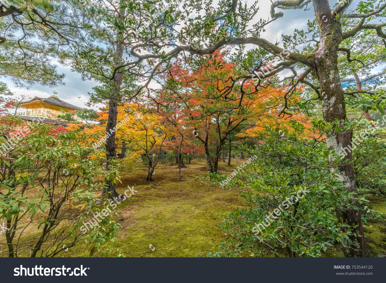 Autumn Leaves Fall Foliage Maple Trees Stock Photo (100% Legal ...