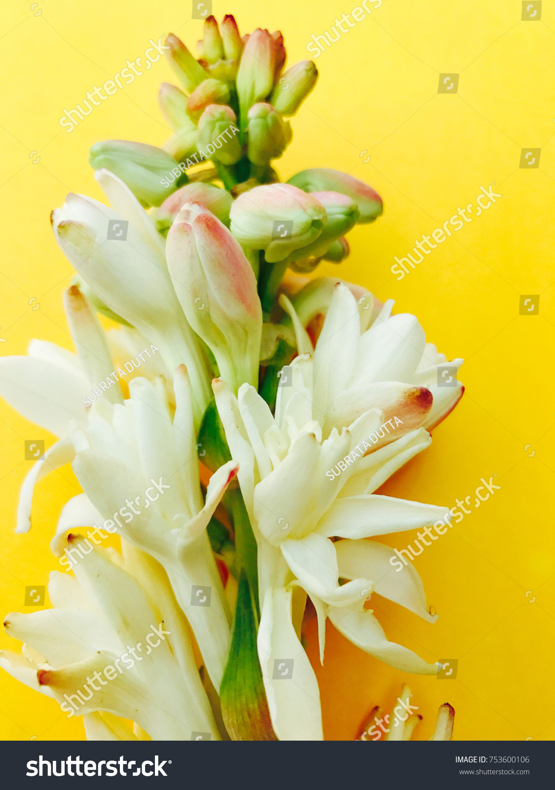 Beautiful Bouquet White Tuberose Flowers Buds Stock Photo Royalty