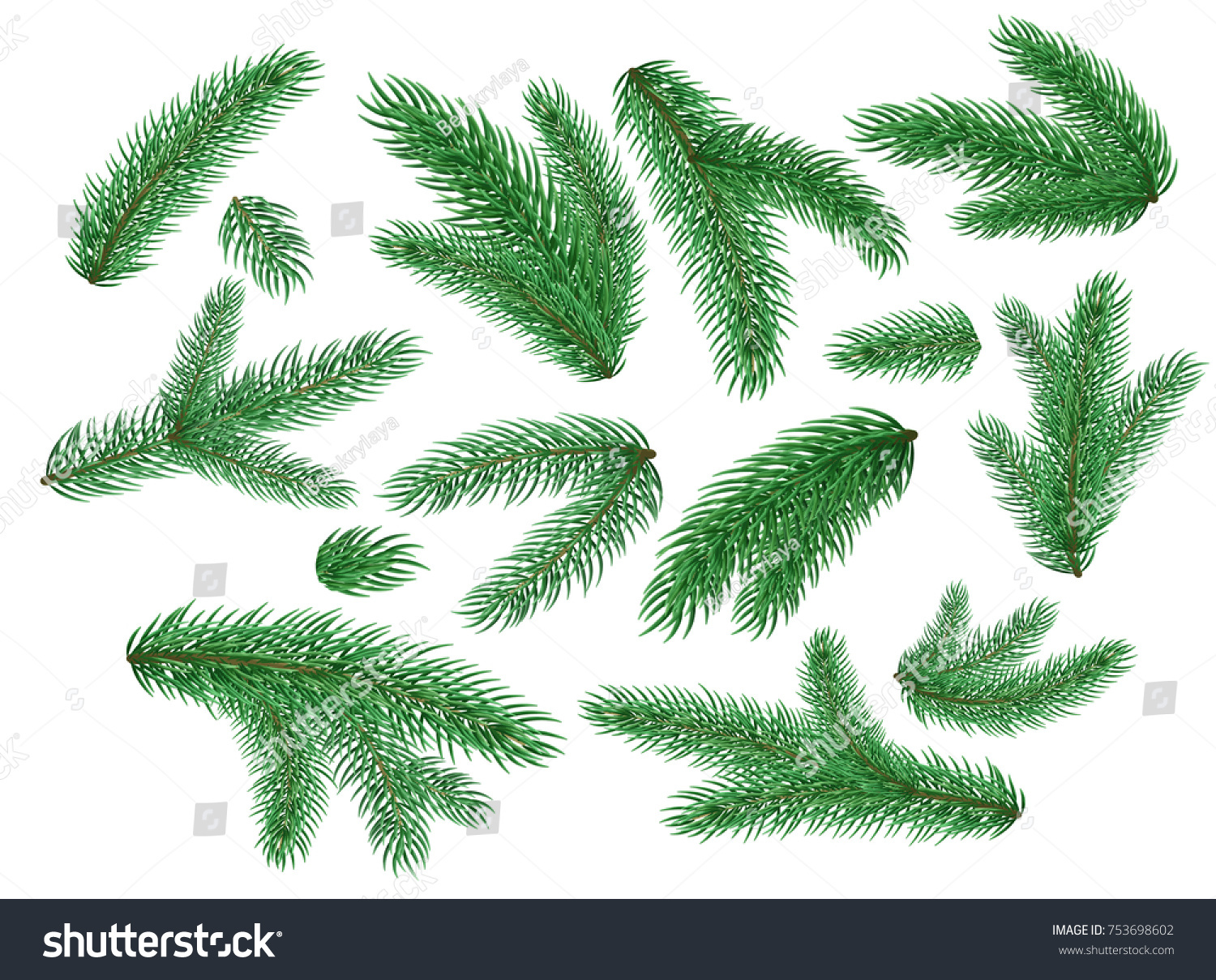 Spruce fir tree branches twigs set stock vector 753698602 spruce fir tree branches twigs set christmas new year winter holiday natural green biocorpaavc Image collections
