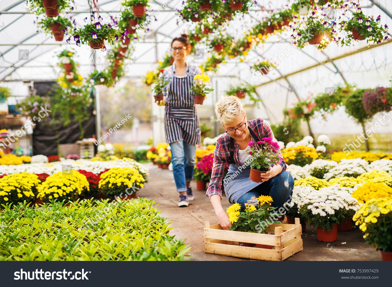 Two Beautiful Charming Busy Florist Stock Photo (Royalty Free ... on beautiful floral design, beautiful timeline design, beautiful building design, beautiful industrial design, beautiful yard design, beautiful greenhouse structure, beautiful fish design, beautiful furniture design, beautiful garden design, beautiful bar design, beautiful family design, beautiful gift shop design, beautiful greenhouse garden, beautiful nature design, beautiful home greenhouse, beautiful greenhouse interiors, beautiful small greenhouses, beautiful hospital design, my garden layout design, beautiful solar design,