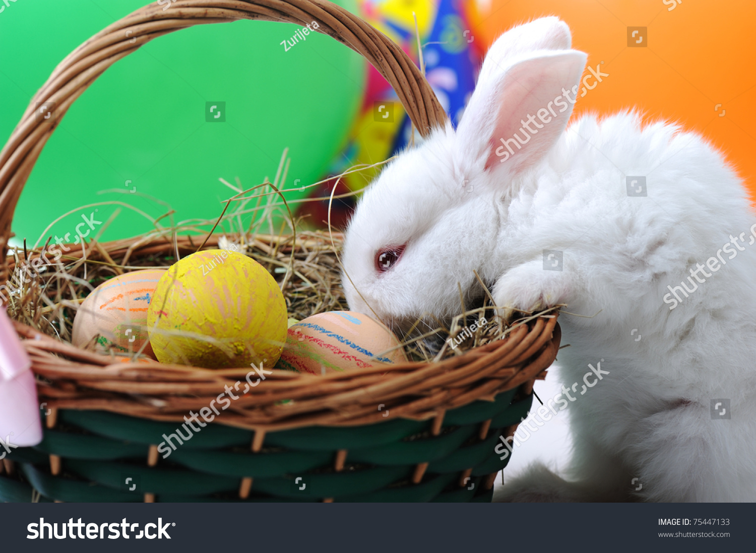 White Beautiful Rabbit Easter Bunny Eggs Stock Photo 75447133 ... for Real Easter Bunny With Eggs  156eri