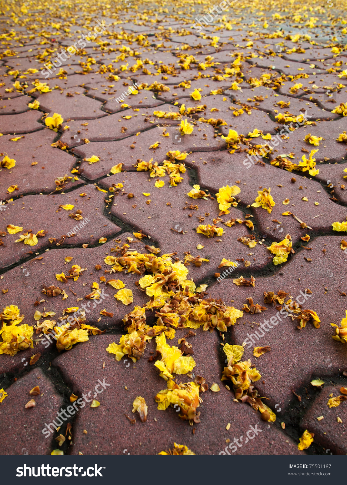 Tiny Yellow Flowers Falling On Ground Stock Photo Royalty Free