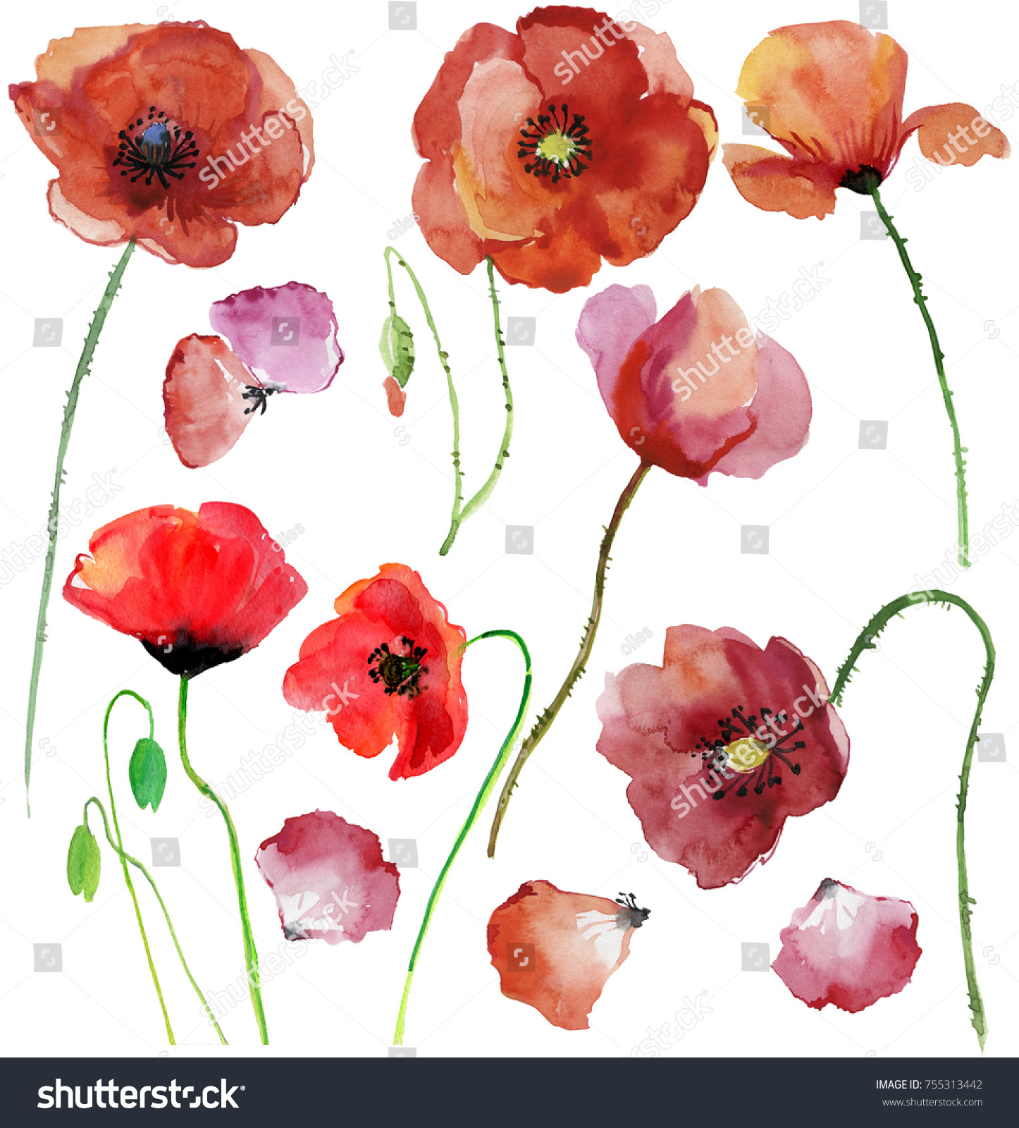 Watercolor Illustration Botanical Flowers Petals Drawing Stock