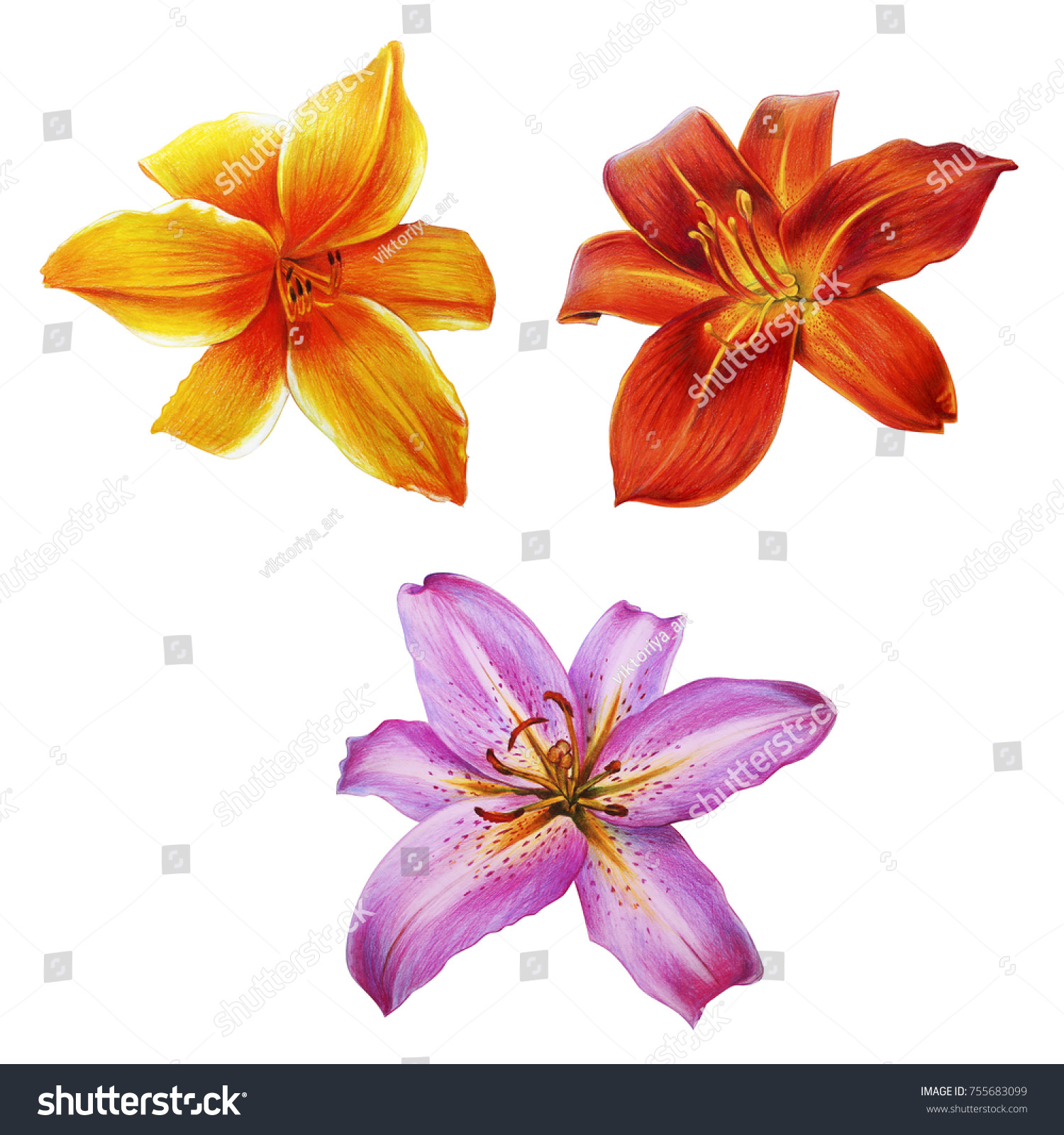 Lilies Different Colors Stock Illustration 755683099 Shutterstock