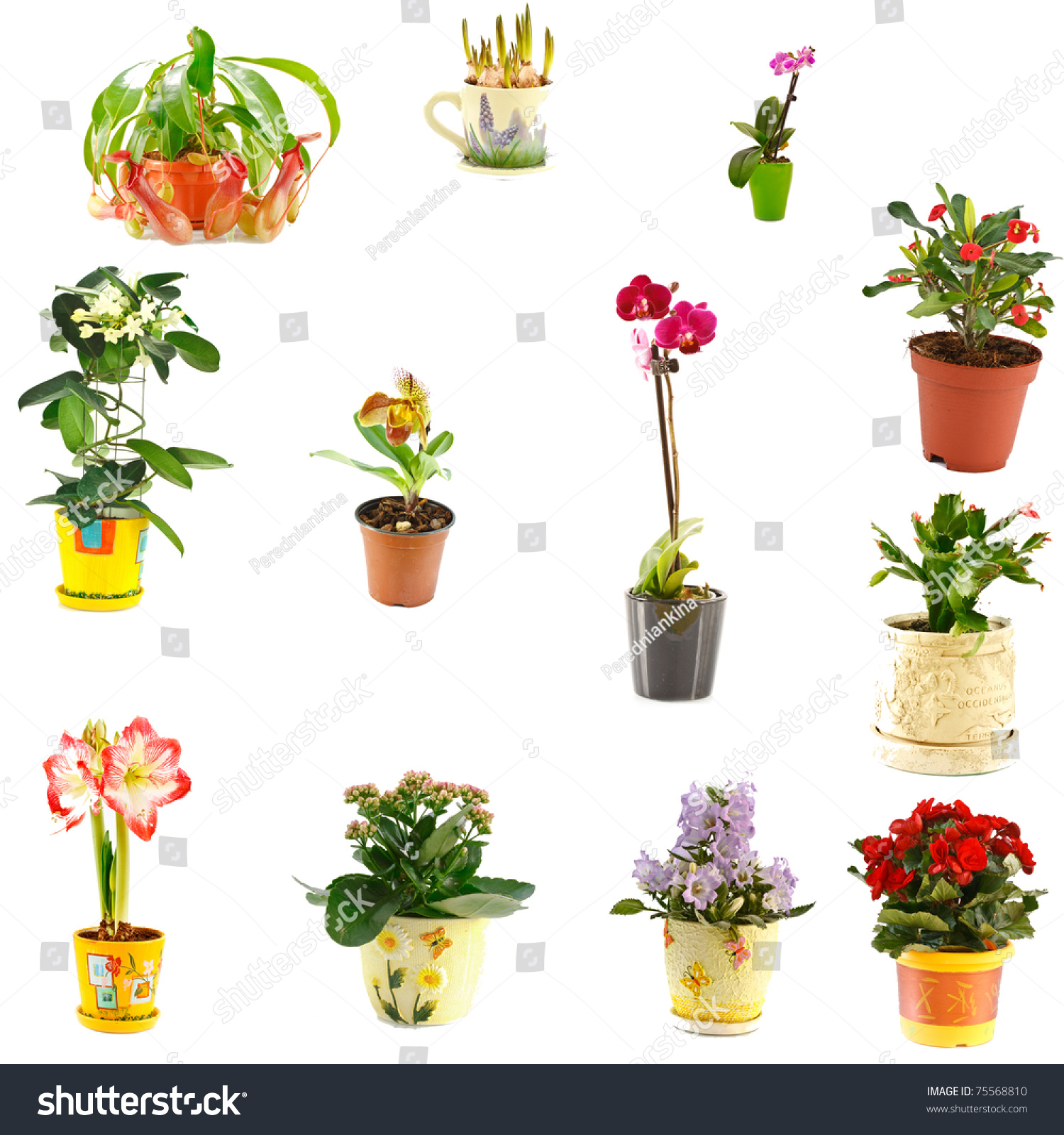 Collage of indoor plants of different varieties stock photo 75568810 shutterstock - Indoor plant varieties ...