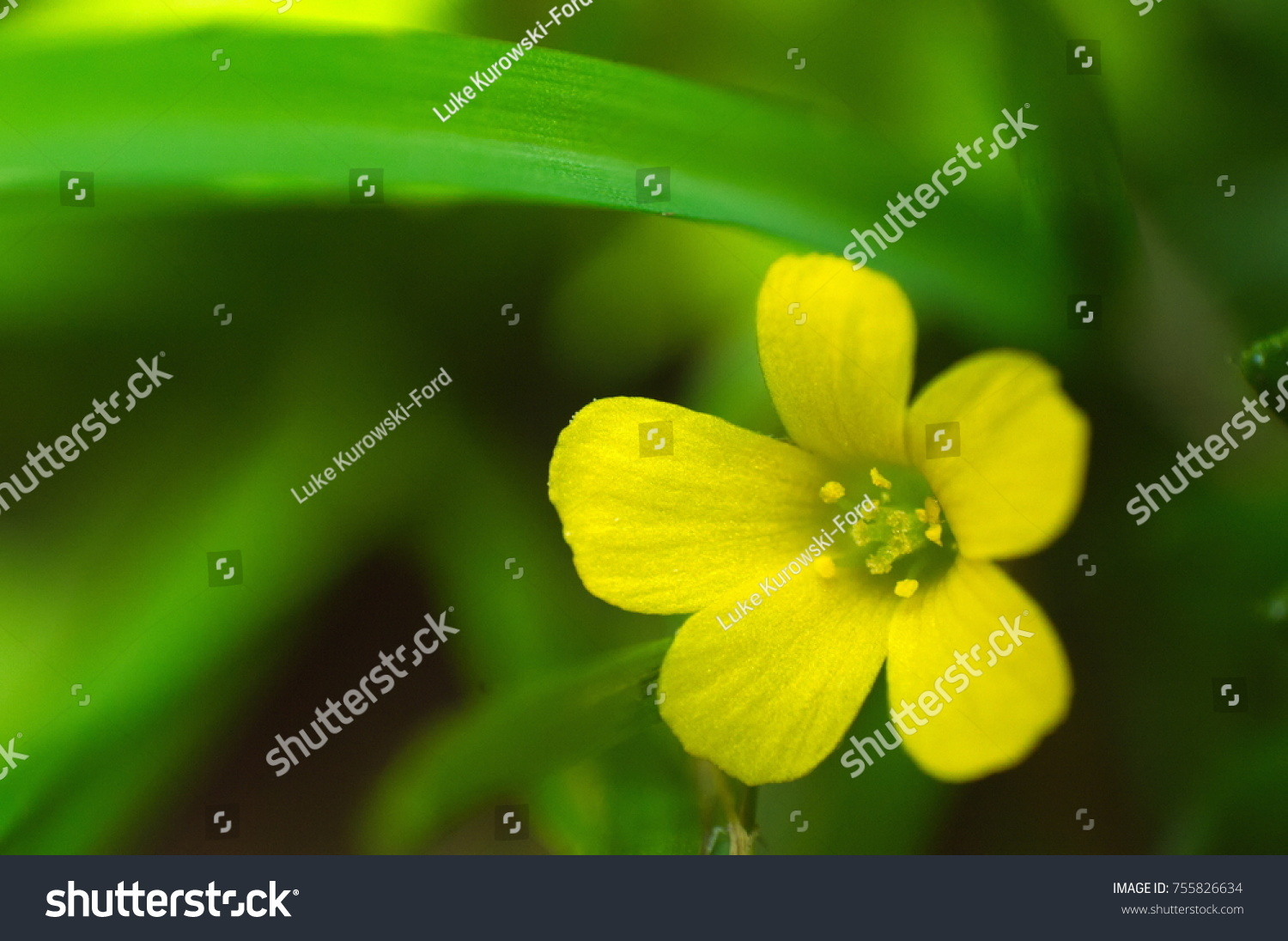 Pretty Little Yellow Flower Surrounded By Stock Photo Edit Now