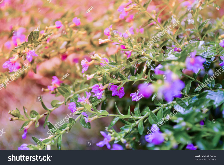 False Heather Elfin Herbsmall Purple Flower Spring Nature