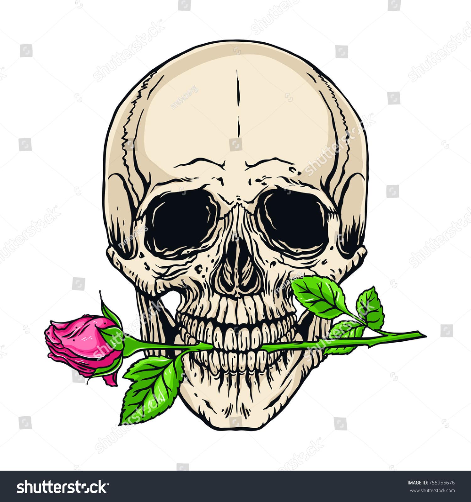 Hand Drawn Illustration Anatomy Human Skull Vectores En Stock ...