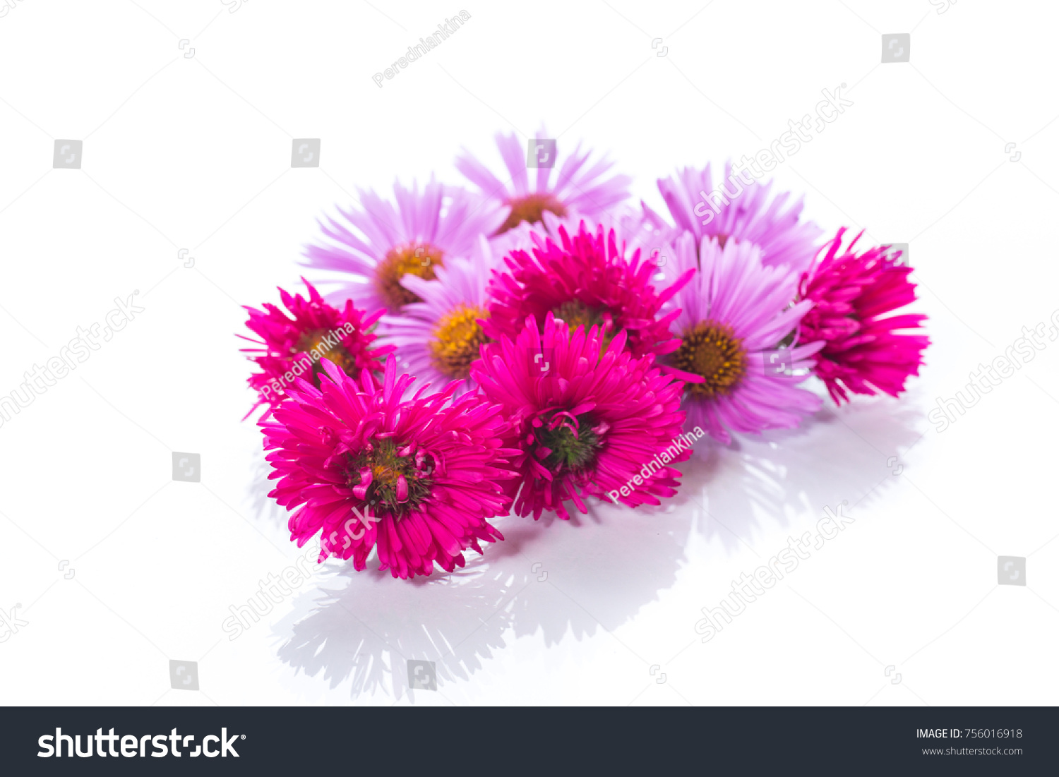 Small Beautiful Chrysanthemum Flowers On A White Background Ez Canvas