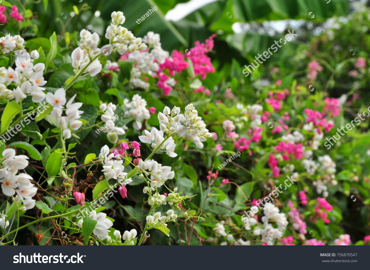 Pink And White Small Flowers Beautiful White And Pink Flowers And
