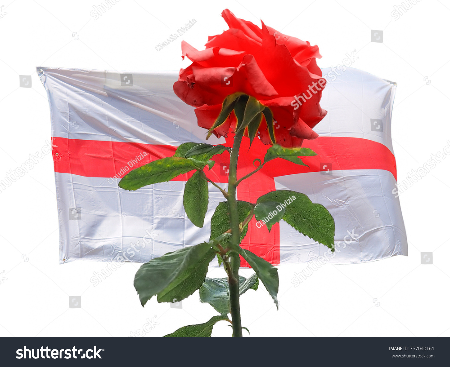 Red Rose Symbol England Over English Stock Photo Edit Now