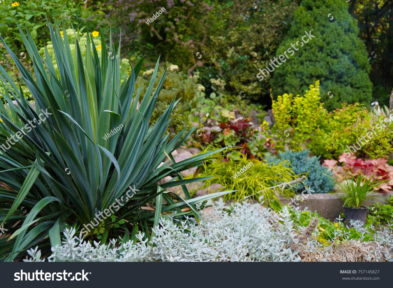An Attractive Arrangement Of Plants In The Garden