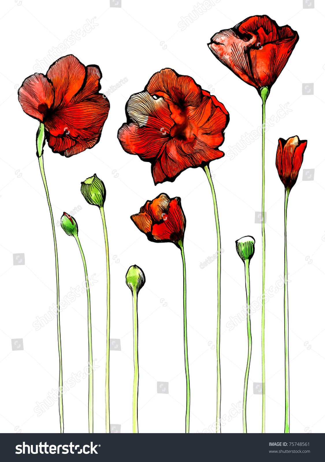 Pen And Ink Watercolor Flowers The Illustration Drawn With