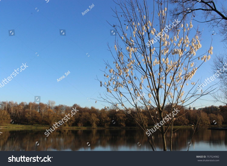 Russia Moscow Park Tsaritsyno Autumn Tree Stock Photo 757524982