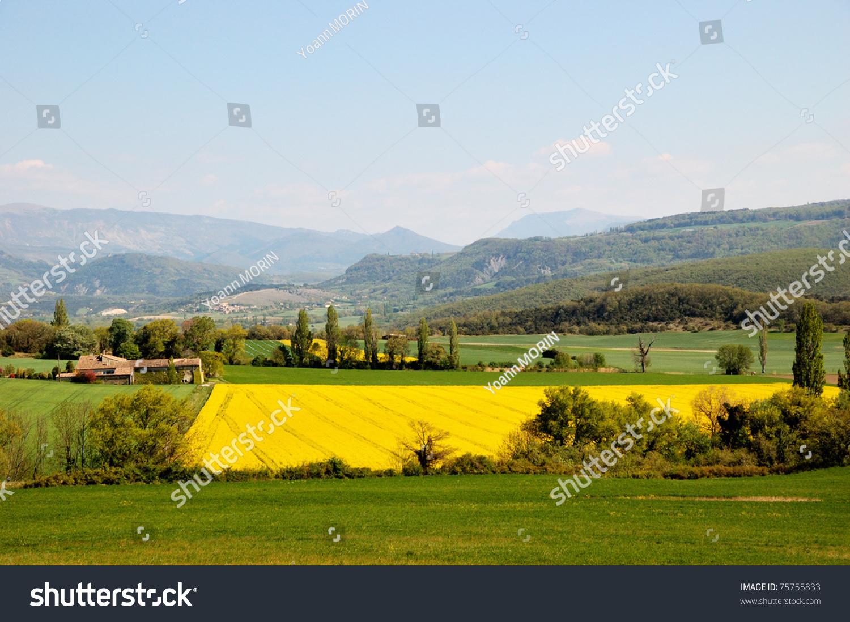 beautiful yellow field landscape - photo #33