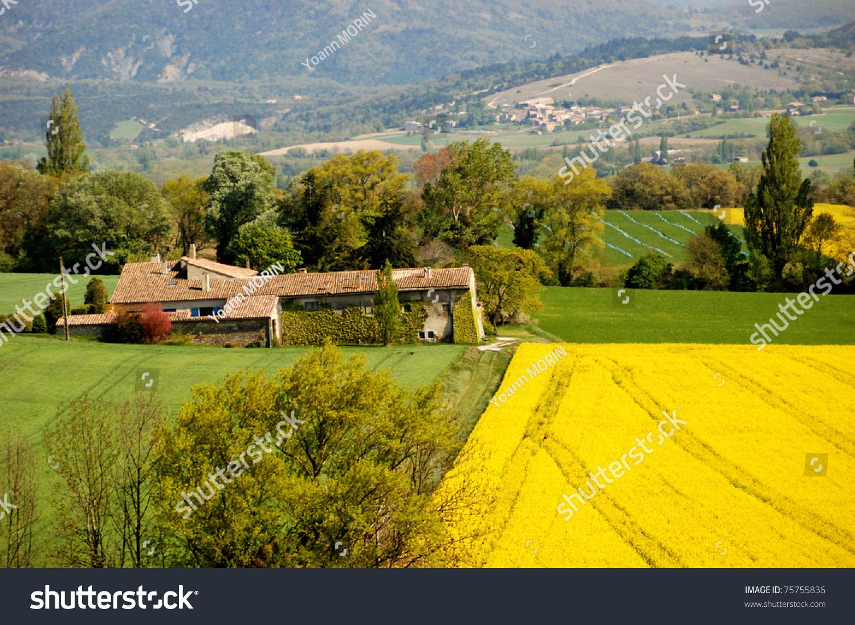 beautiful yellow field landscape - photo #32
