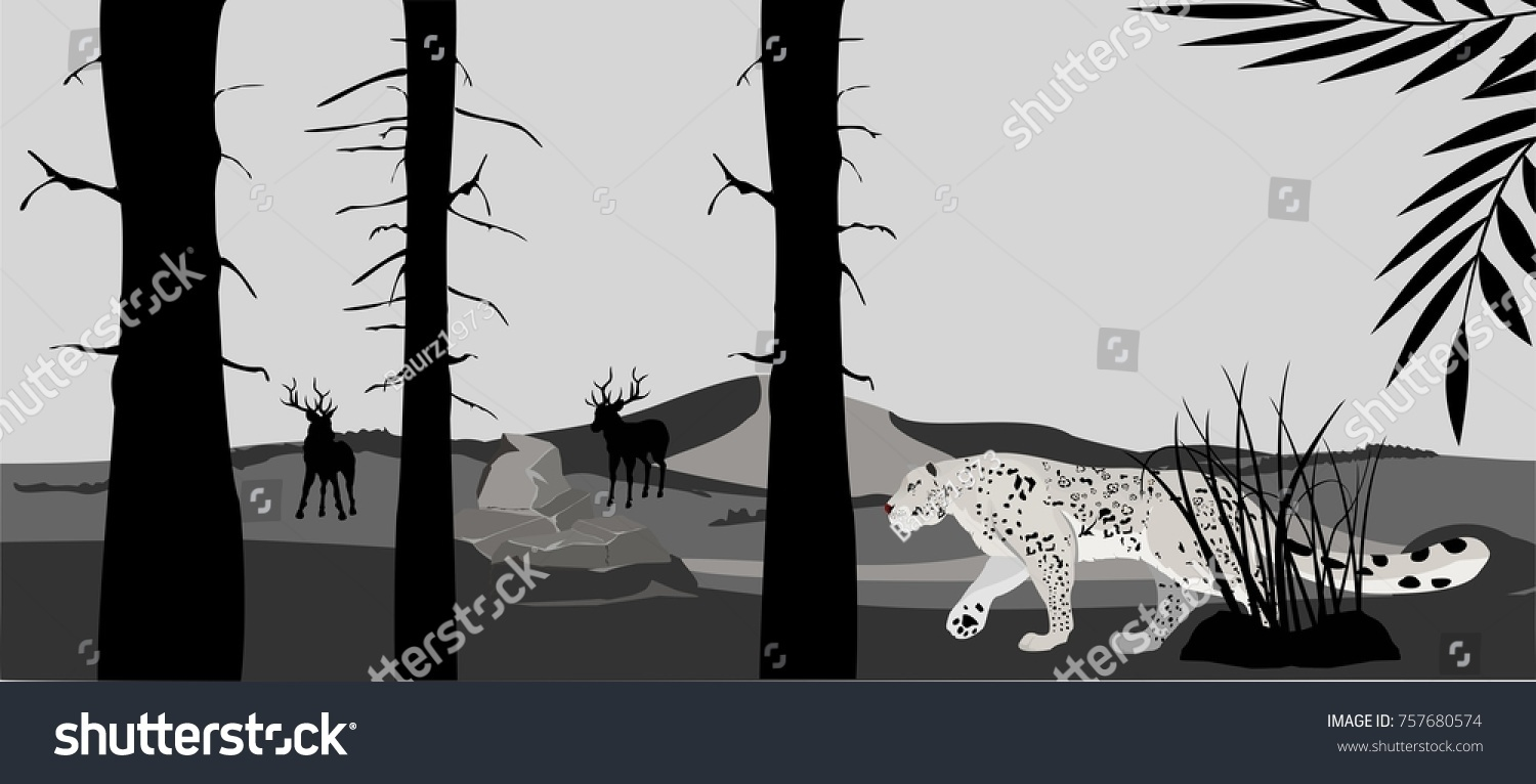 40328dc2cff98f Monochrome Silhouette Snow Leopard Walking Forest Stock Vector ...