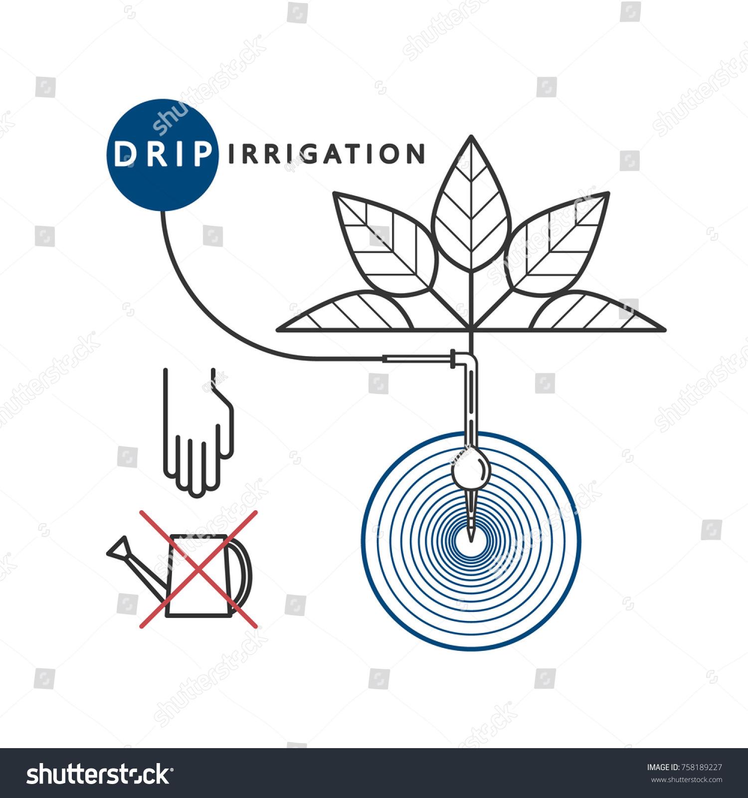 Concept Soil Moistening Drip Irrigation System Stock Vector Royalty