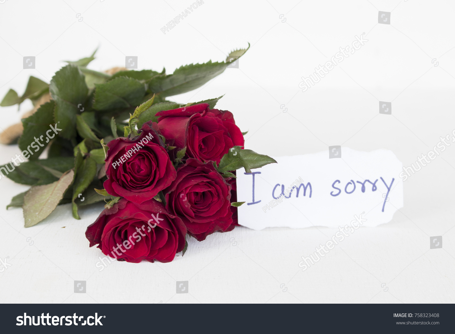 Sorry Message Card Bundle Red Rose Stock Photo (Edit Now