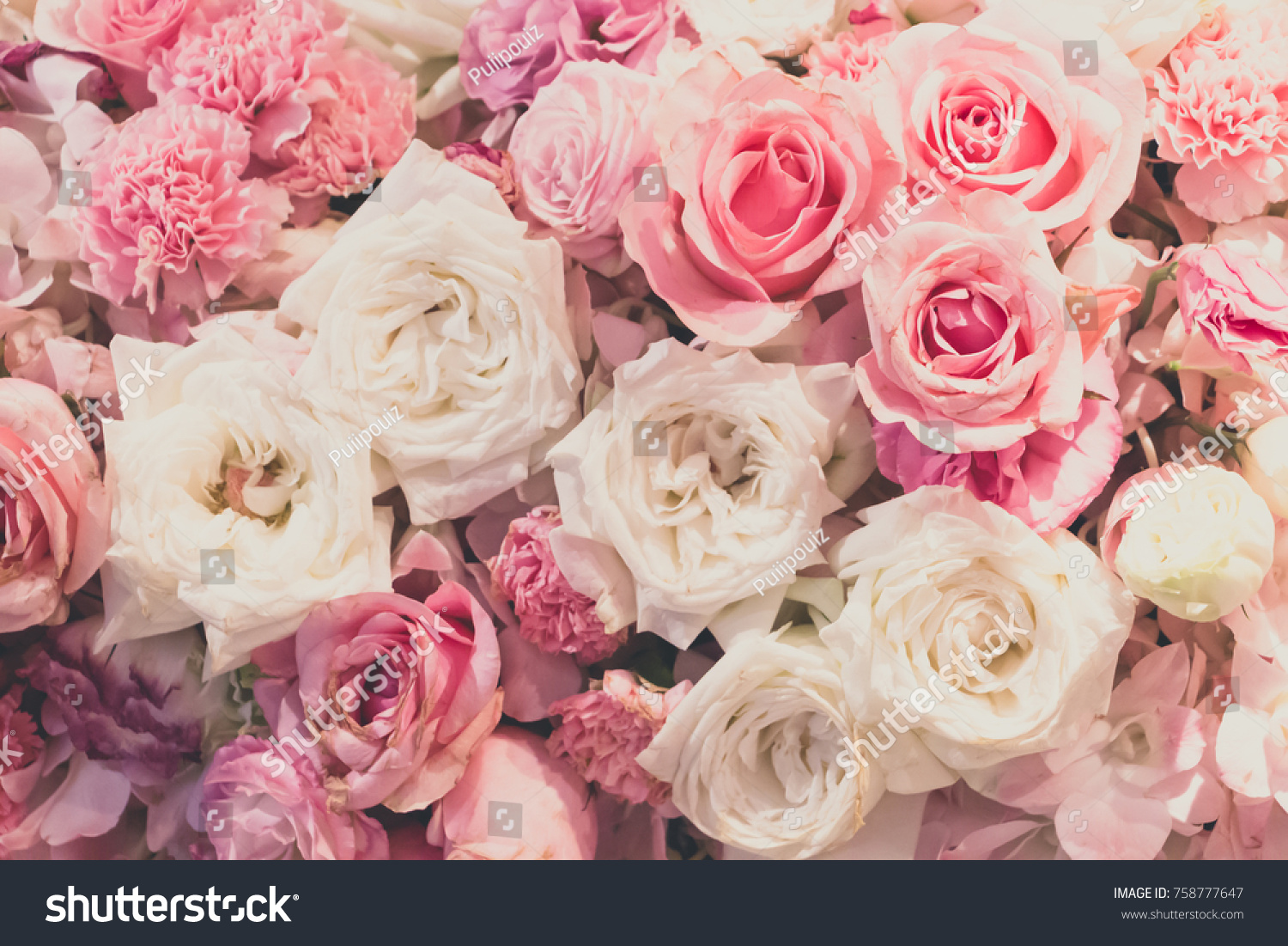 Natural Pink White Roses Pink Flowers Stock Photo Royalty Free
