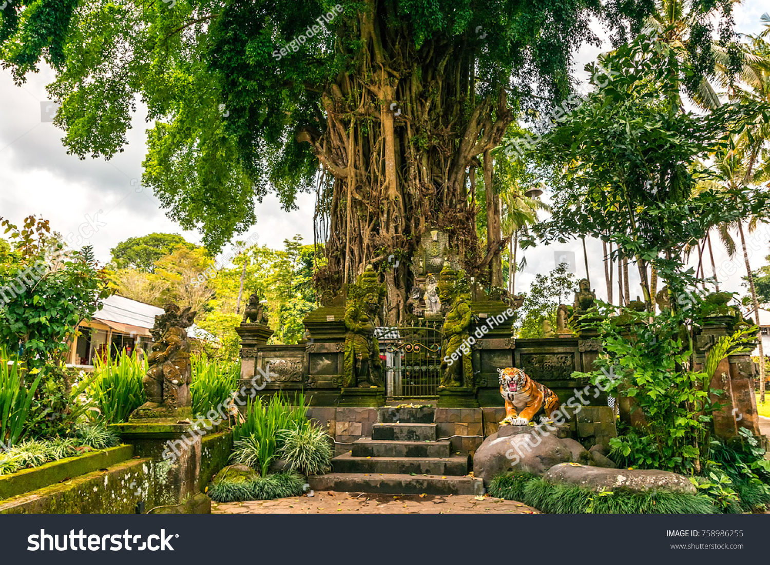 Sacred Tree Little Temple Tiger Figure Stock Photo (Royalty Free ...