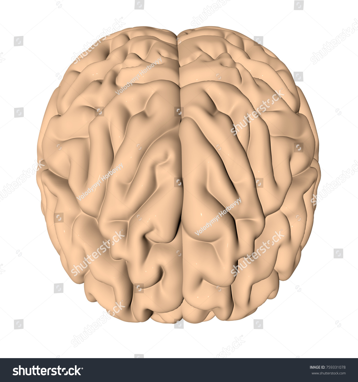 Human Brain 3 D Render Stock Illustration 759331078 - Shutterstock