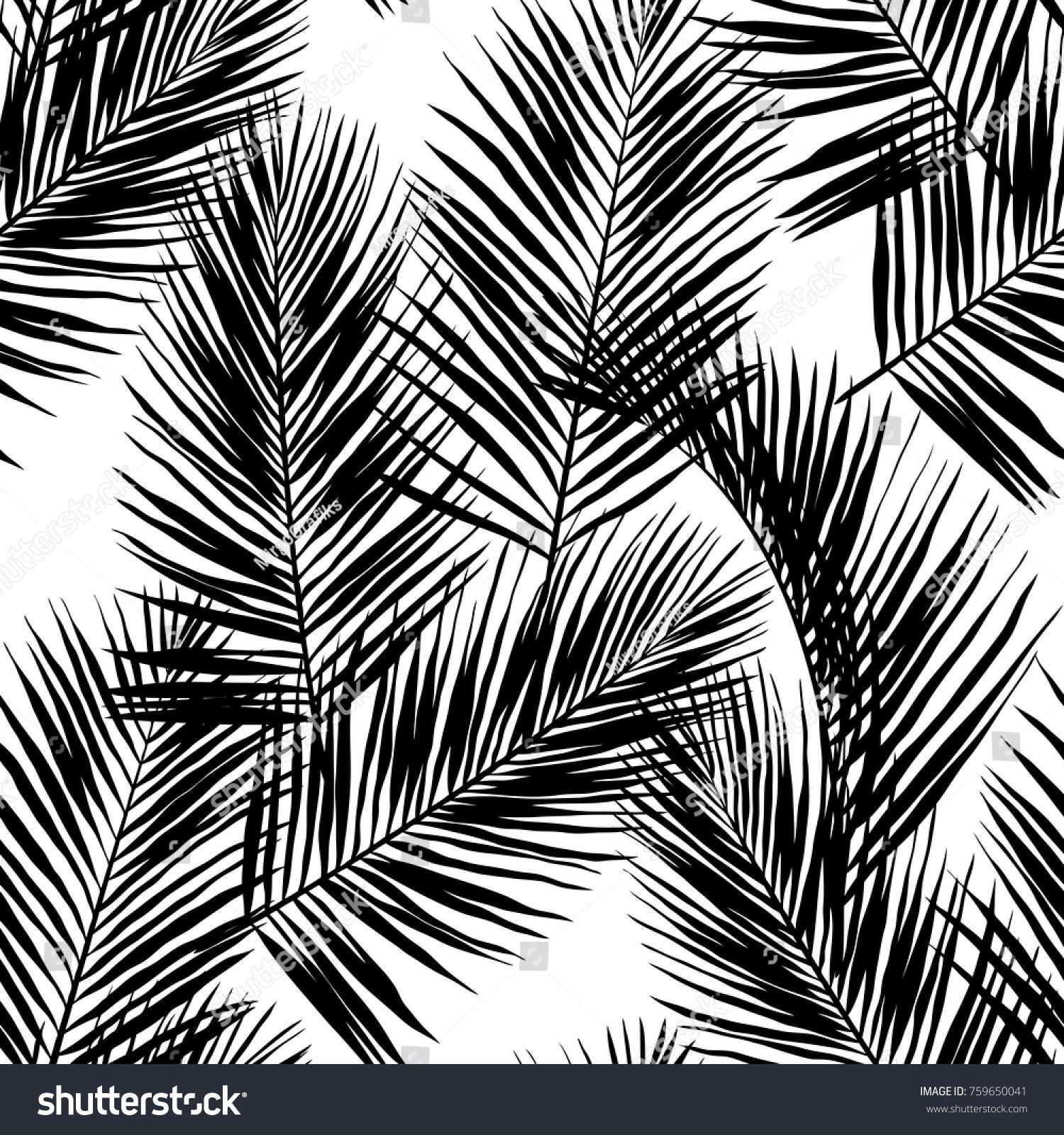 Black Vector Palm Leaves On White 759650041