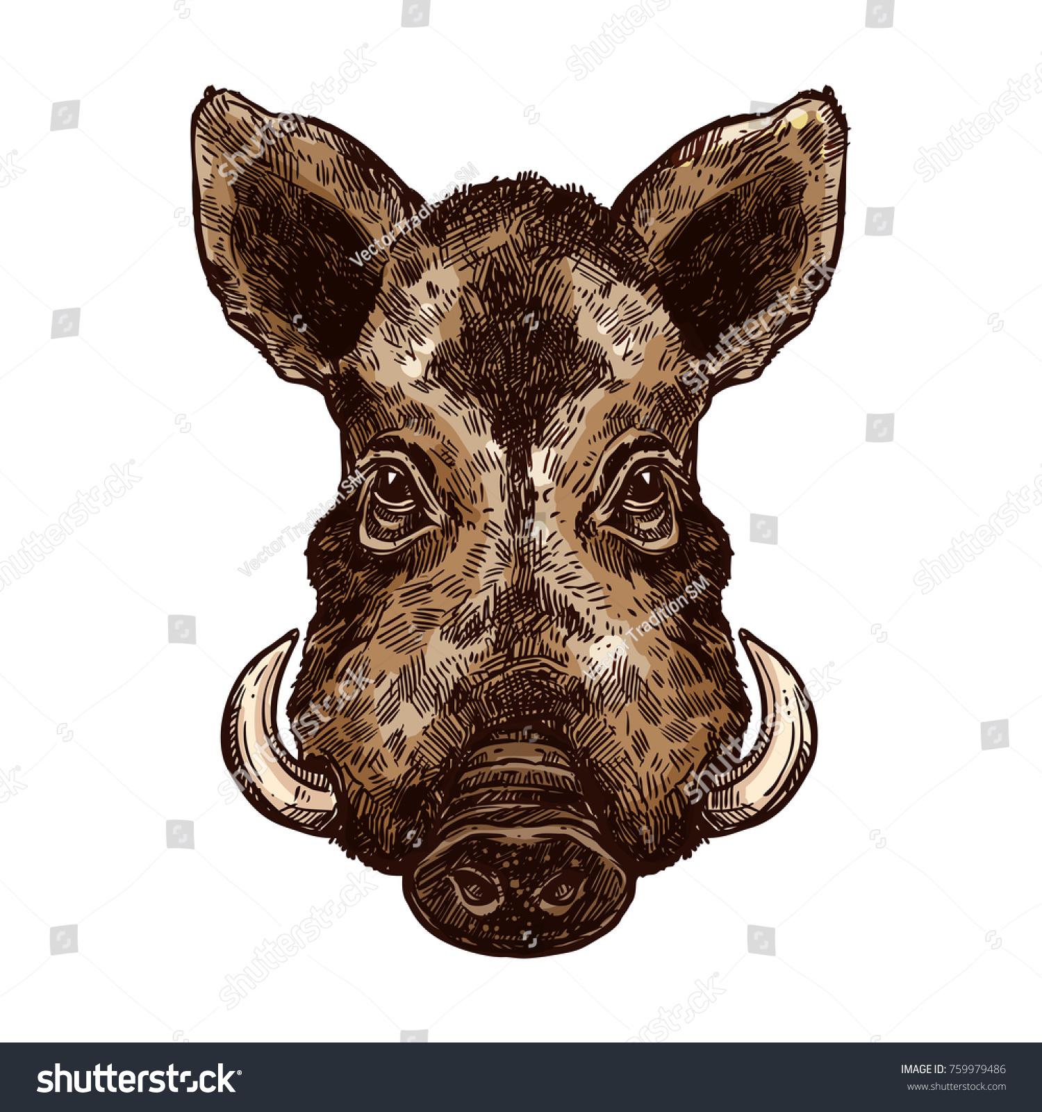 Boar Wild Pig Animal Sketch Hog Stock Vector 2018 759979486