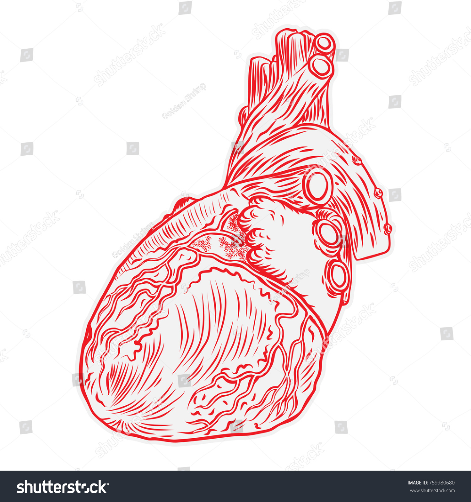 Heart Hand Drawn Isolated On White Stock Vector 759980680 - Shutterstock