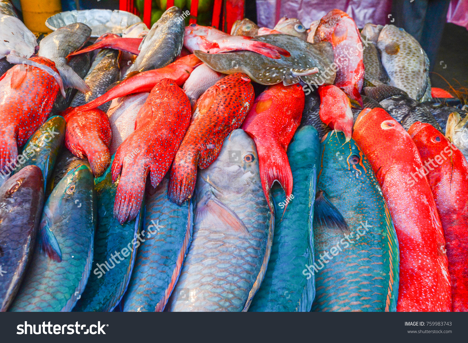 Pile Fresh Colorful Fish Red Snapper Stock Photo (Royalty Free ...