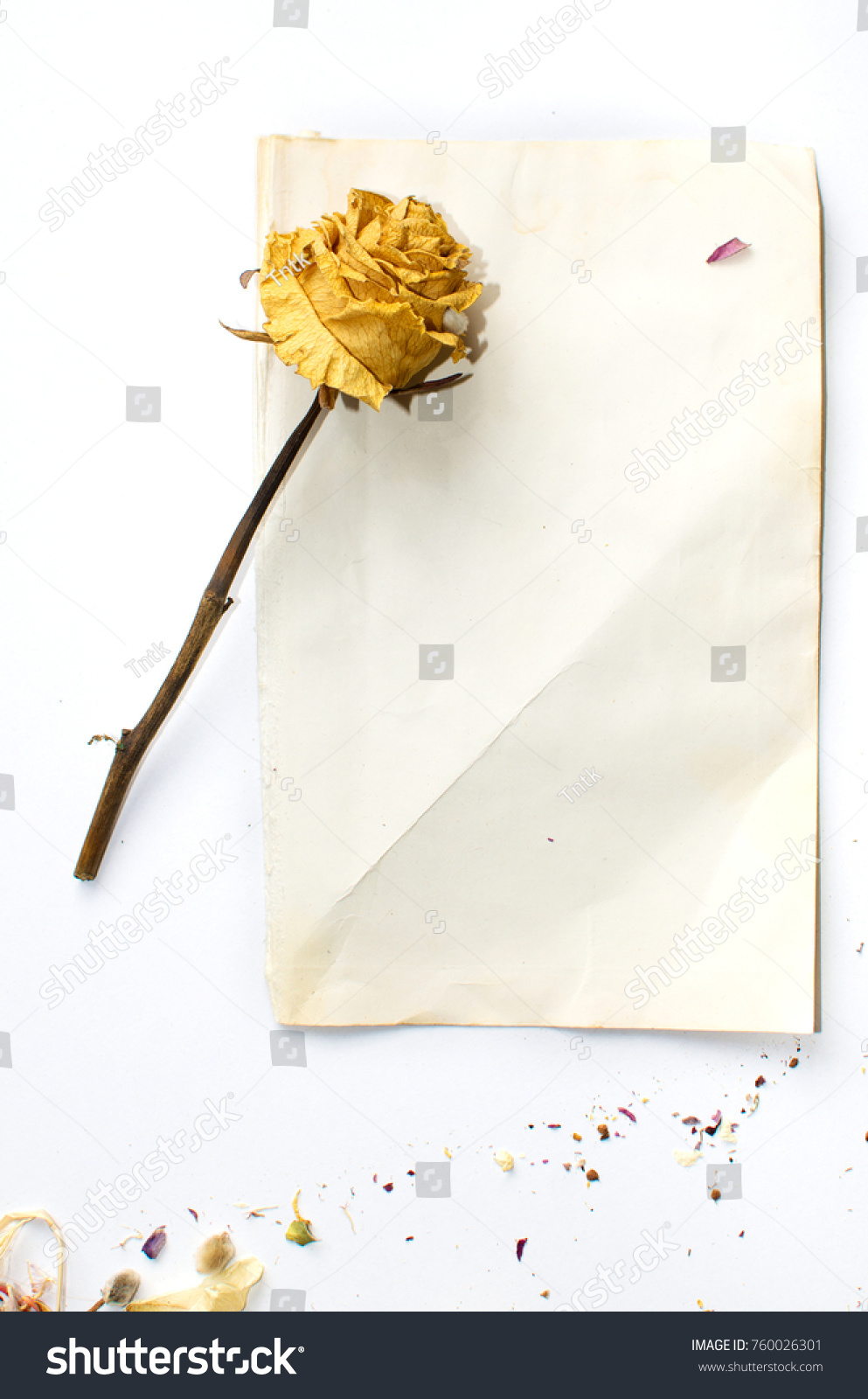 Dried Flowers Lying On White Sheet Stock Photo Royalty Free