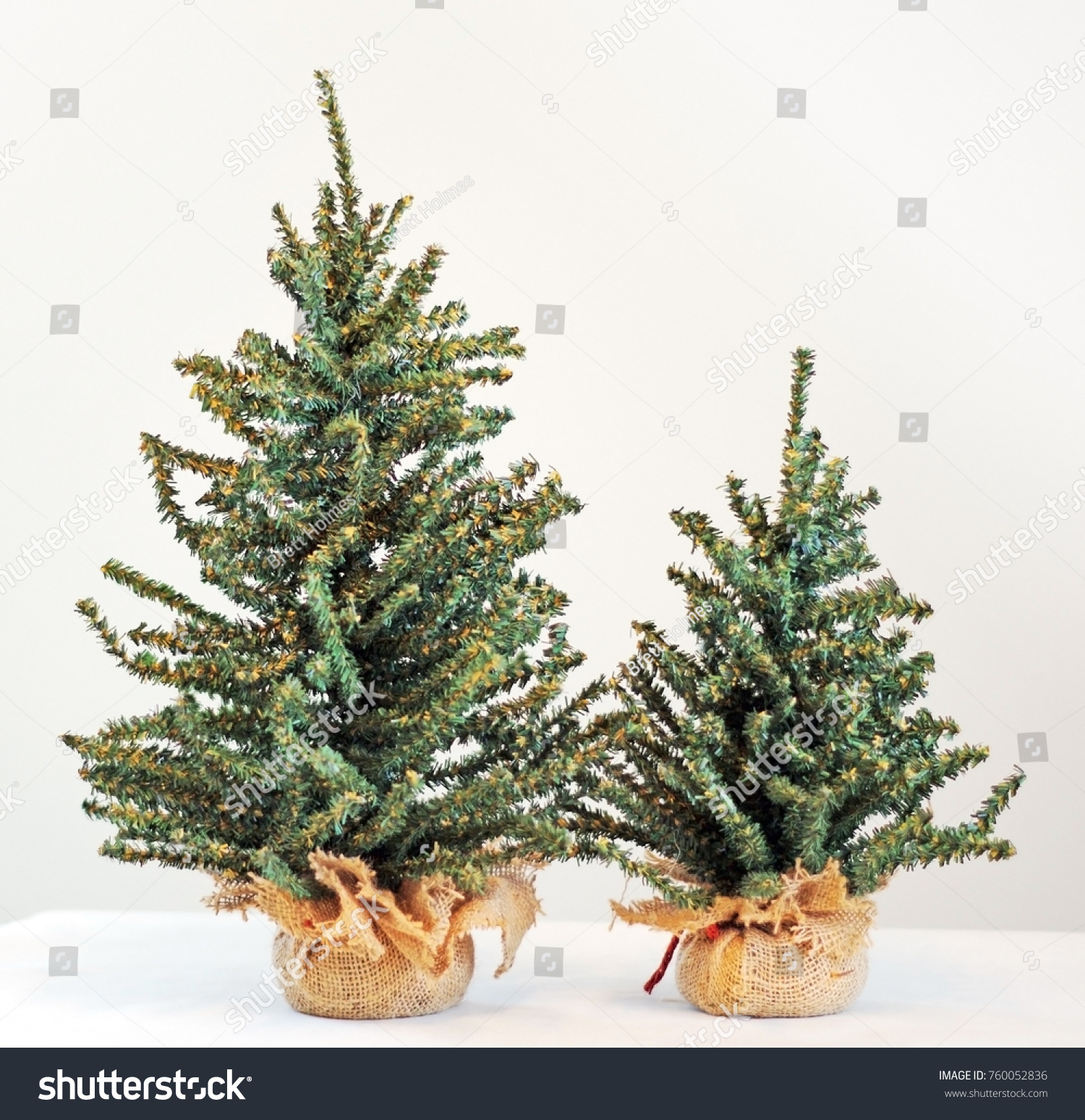 Big Small Christmas Trees Against Neutral Stock Photo Edit Now 760052836