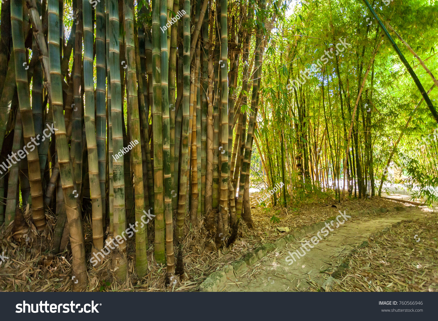 Trail Among Bamboo Forest Bamboo Trees Stock Photo Edit Now