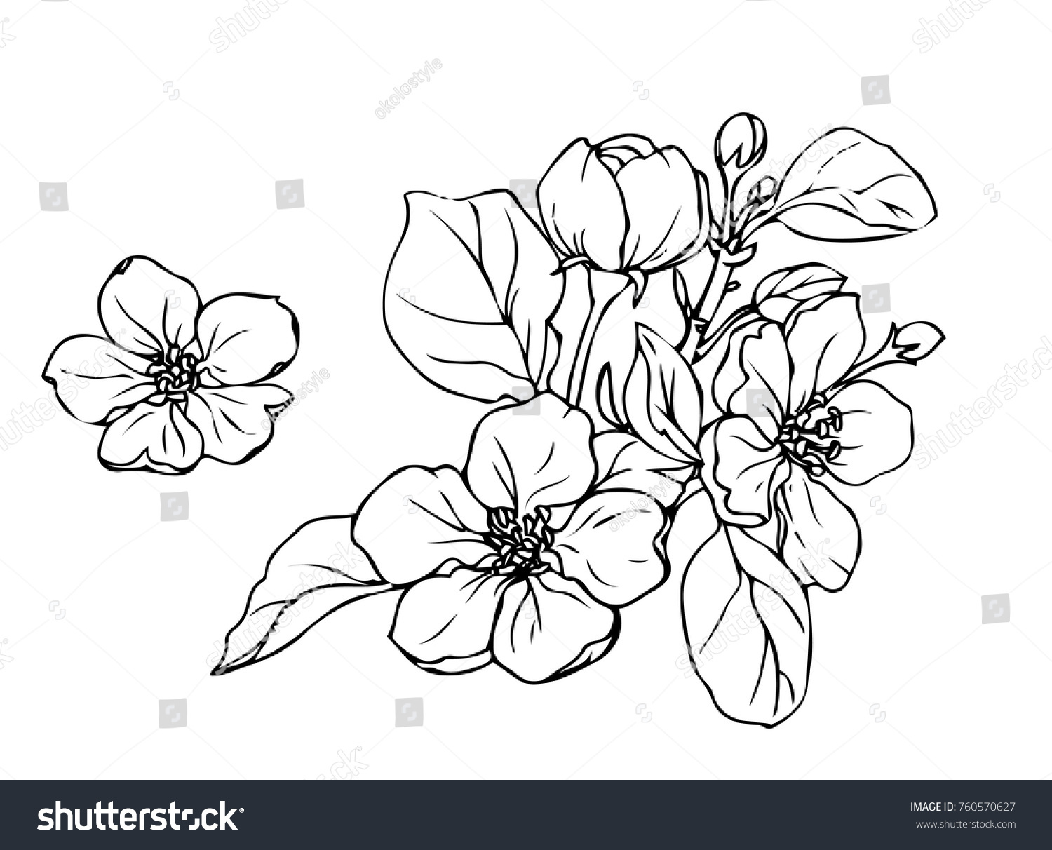 Ink, pencil,  the leaves and flowers of apple isolated. Line art transparent background. Hand drawn nature painting. Freehand sketching illustration.  #760570627