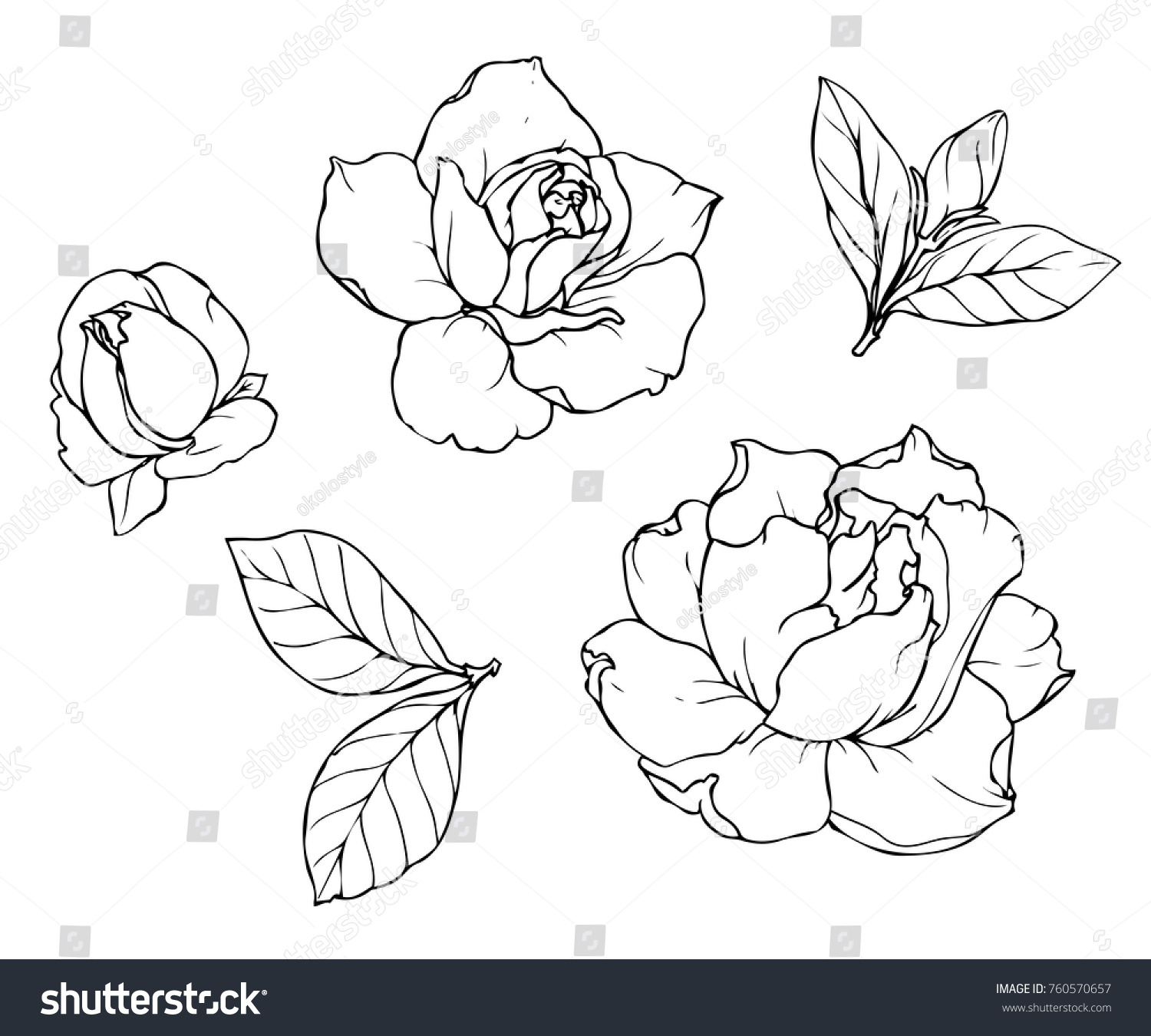 Ink Pencil Leaves Flowers Gardenia Isolated Stock Vector Royalty