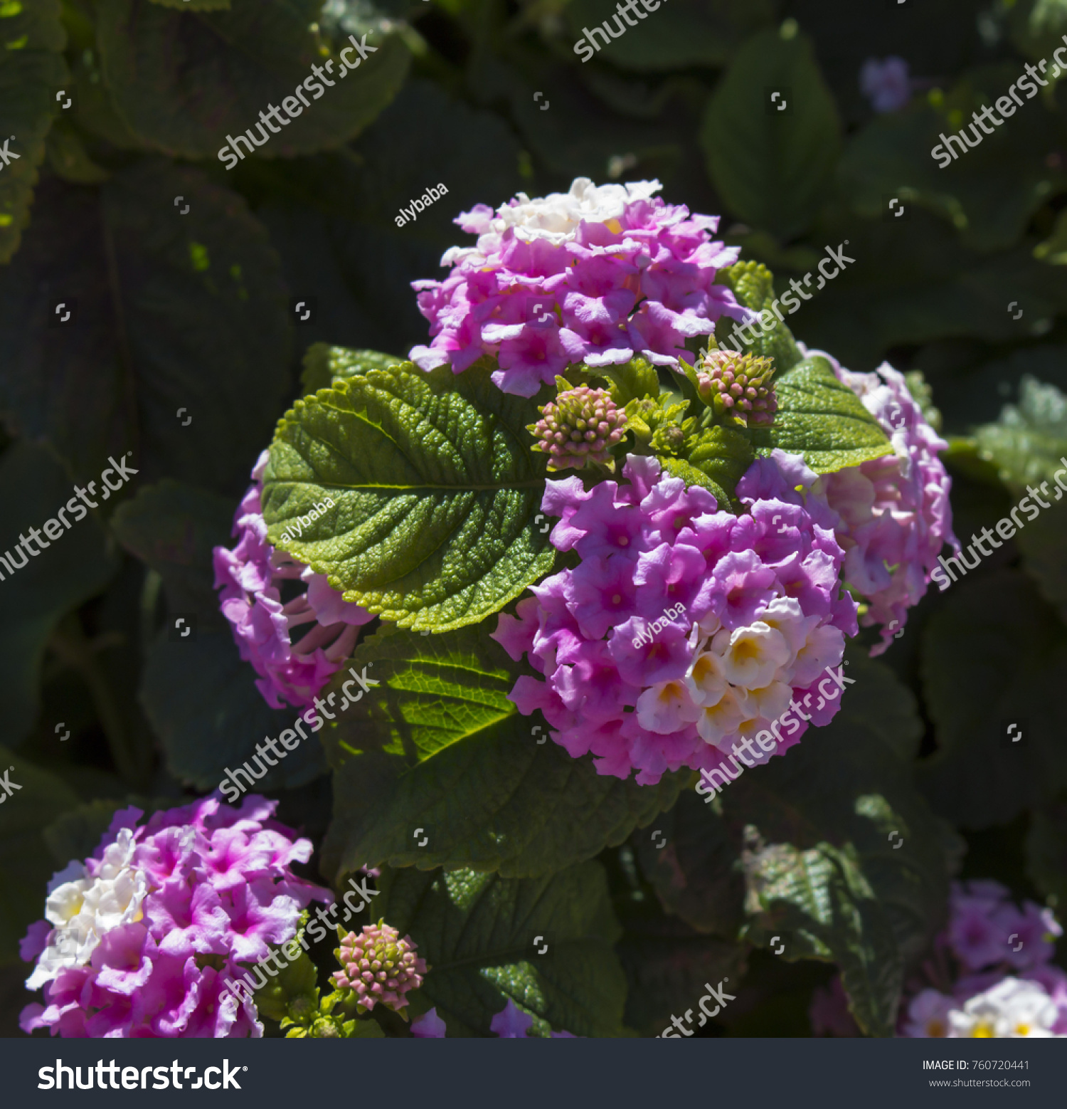 White Aromatic Flower Images Flower Decoration Ideas