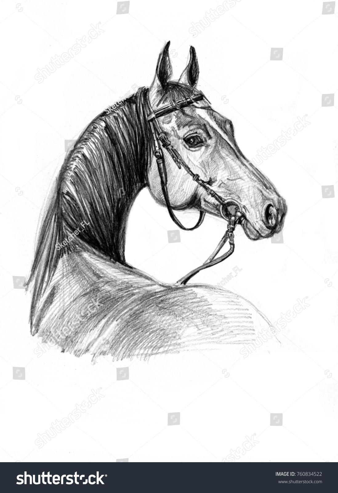 Pencil Drawing Horse Head Portrait Beautiful Stock Illustration 760834522