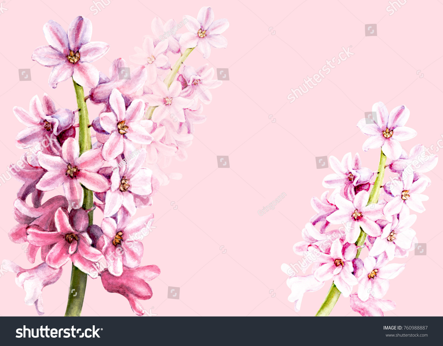 Spring Flowers Hyacinth Watercolor Illustration Hand Drawing Ez