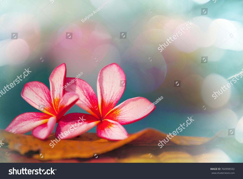 Beautiful tropical flowers hawaiian garden stock photo 100 legal beautiful tropical flowers in hawaiian garden izmirmasajfo