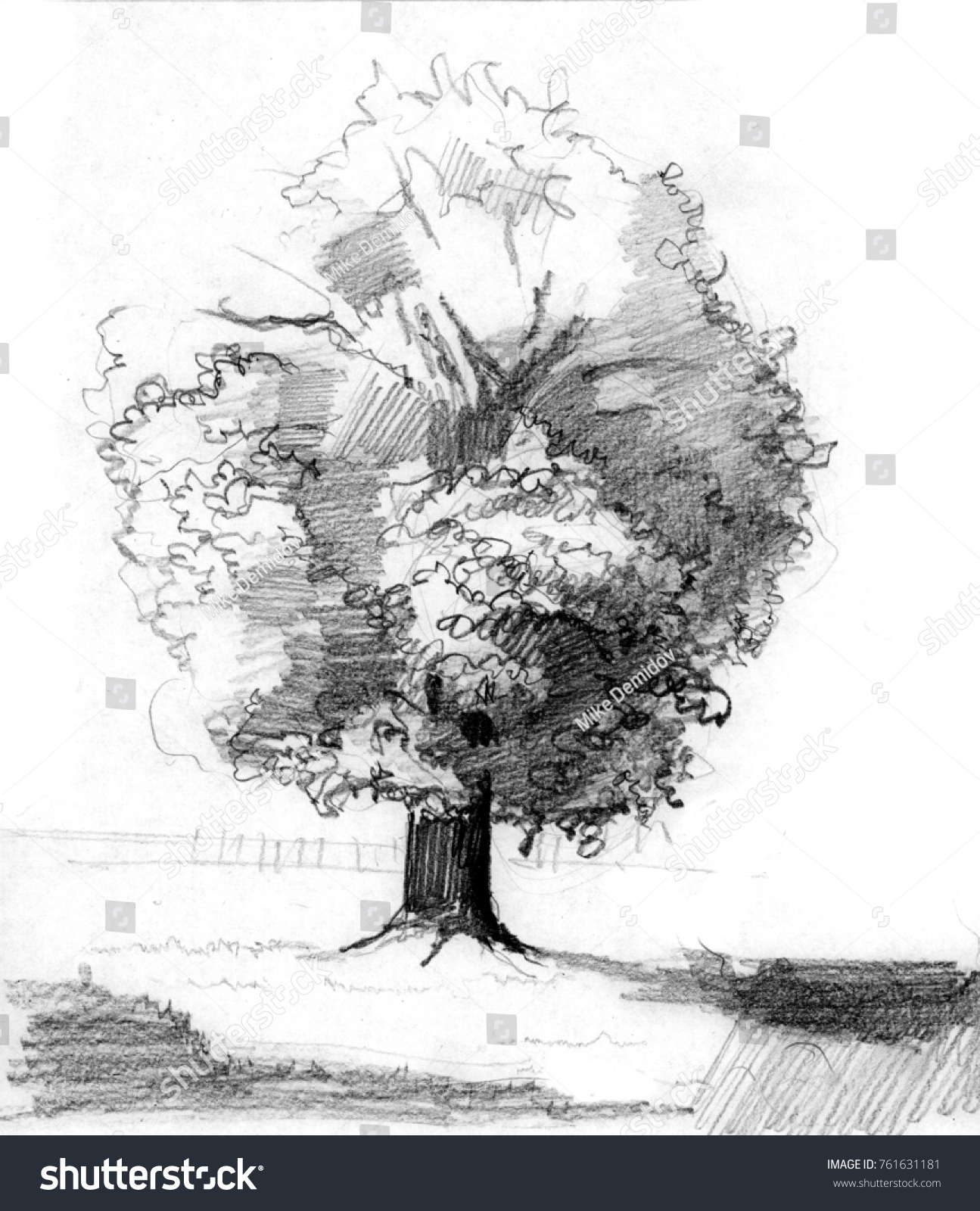 Pencil sketch of alone oak in the field