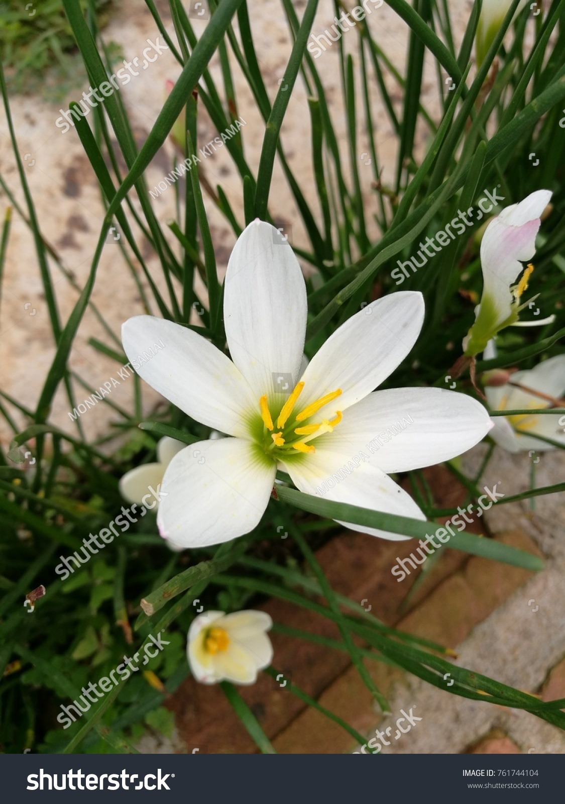 Beautiful Lily Flowers In The Garden Ez Canvas