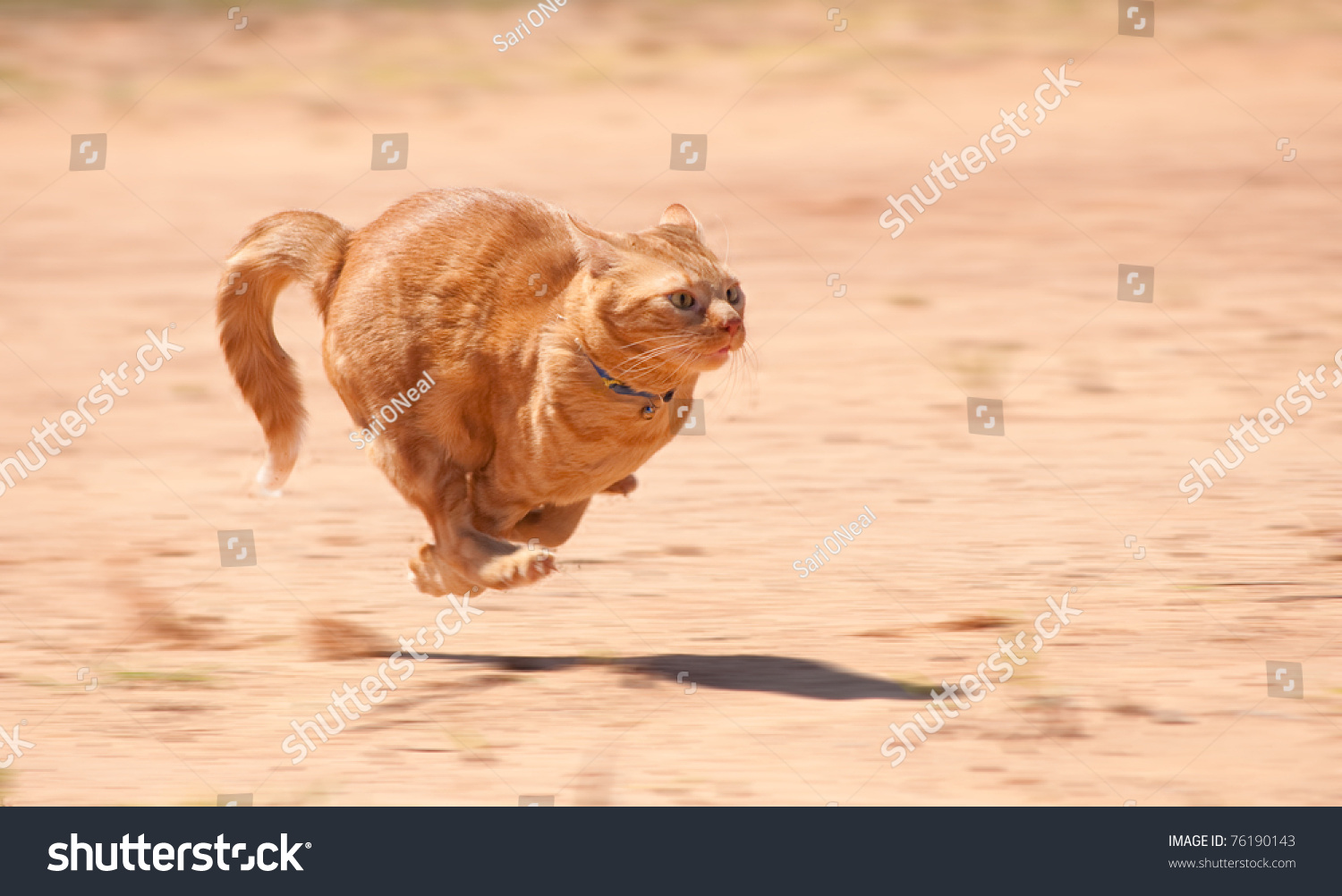 stock-photo-orange-tabby-cat-running-ful