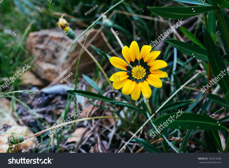 Beautiful wild daisy flower on roadside stock photo edit now beautiful wild daisy flower on roadside in sunlight izmirmasajfo
