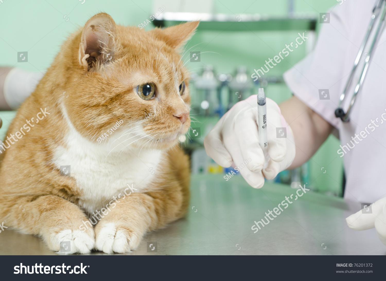 Чумка у кошек 17 фотография