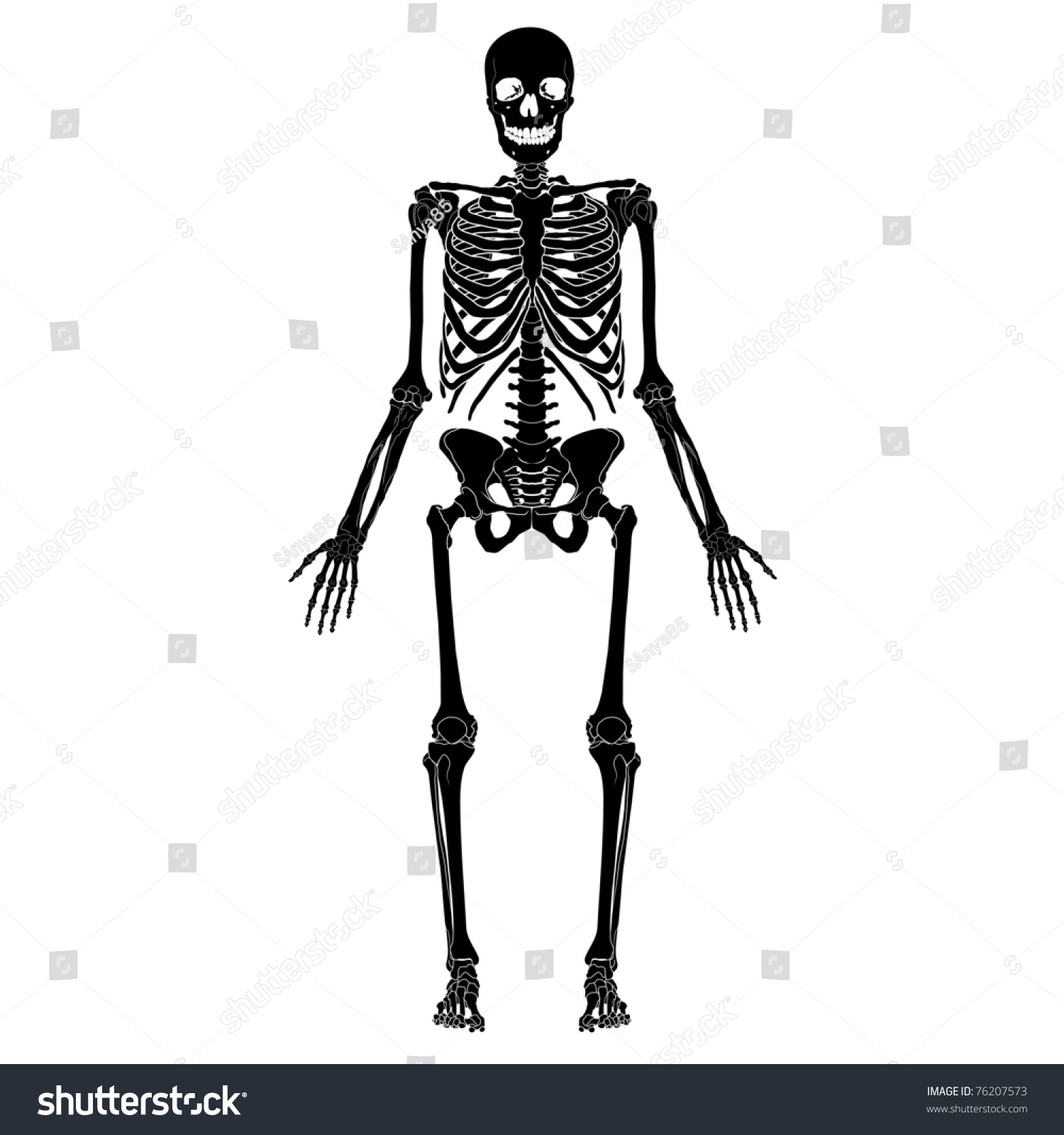 human skeleton eps 10 stock vector 76207573 - shutterstock, Skeleton