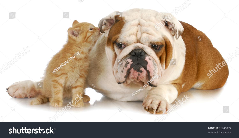Dog Whispering In Cat S Ear